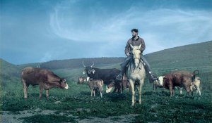 Cowboy, an image from the Agriculture project